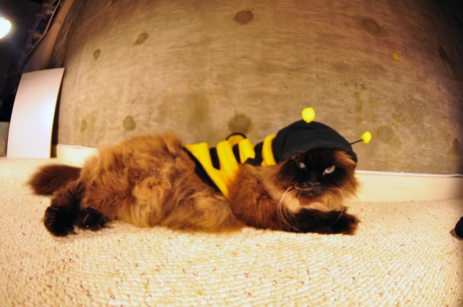 What does a banana slug look like? & Bumble Bee Cat Costume -
